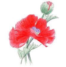 colour red poppy advanced