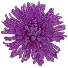 fiori viola fiori gif ed animazioni page 6