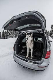 Pet Ready Exterior Doors by 21 Best Mercedes Benz Pets Images On Pinterest Pets Mercedes