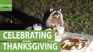funny animal thanksgiving pictures wild raccoon celebrates thanksgiving with his friends youtube