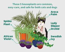 how to grow houseplants without harming your pets