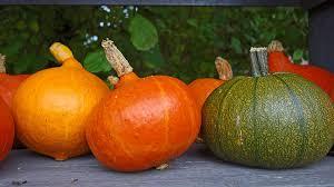 free photo ornamental fruit pumpkins autumn decoration max pixel