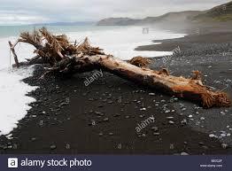 drift wood and pebbles on black sands beach near kaikoura