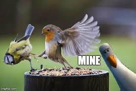 Mine Meme - untitled imgflip