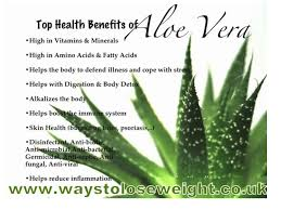 aloe vera plant facts aloe vera colon cleanse what does it do youtube