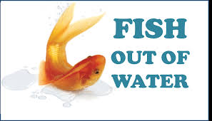fish out of water apk list of synonyms and antonyms of the word fish out of water