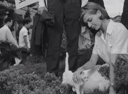 Hiroshima Mon Amour - hiroshima mon amour 1956 cinema cats