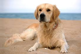 Drinking Rubbing Alcohol Blindness Alcohol Isopropanol Poisoning In Dogs Symptoms Causes