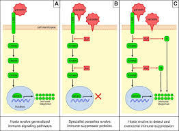 insights from natural host u2013parasite interactions the drosophila
