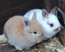 rabbit and chameleon update u2013 tilgate nature centre