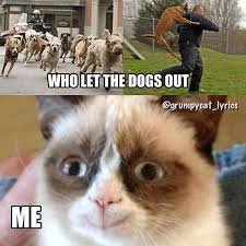 Memes Of Grumpy Cat - 27 grumpy cat funny memes page 2 quotes reviews