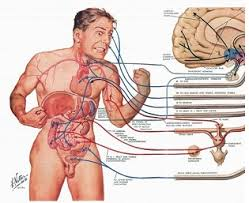 Human Anatomy And Physiology Courses Online Human Anatomy Courses Online At Best Way To Study Anatomy And