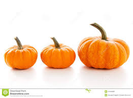 free halloween images on white background pumpkins on white background royalty free stock images image