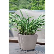 self watering pots available from bunnings warehouse
