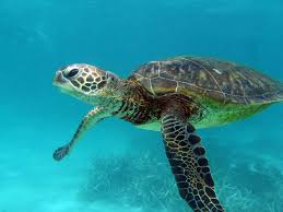 sea turtles on emaze