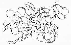 cherries on bunch fruit coloring page for kids fruits coloring
