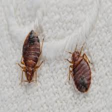 Wisconsin how do bed bugs travel images Bed bug xperts exterminator kenosha wi jpg