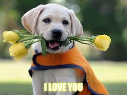 Cute I Love You Meme - cute dog imgflip
