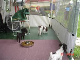 Rv Awning Screen Room Parti Poodle For Sale Parti Poodles Available Parti Poodle Puppy