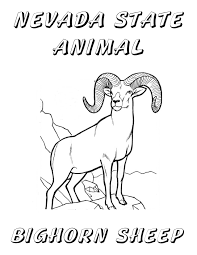 nevada state animal coloring page united states pinterest nevada