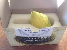 etrog for sale the world s most expensive lemon the economics of an etrog the