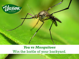 how to fight back against mosquitoes