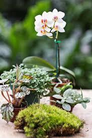 71 best terrariums u0026 plants images on pinterest terrarium plants