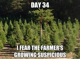 Christmas Tree Meme - day 34 i fear the farmer s growing suspicious inconspicuous