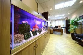aquarium bureau light office with desktop armchair and big aquarium stock image