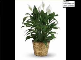 indoor outdoor houseplants picture set for home or office peace