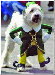 8 cute and fun costume idea for your dogs
