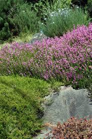 Rock Garden Seattle Purple Heathers And Drought Tolerant Plants In A Seattle Rock