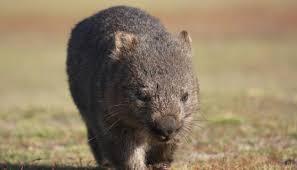 imagenes animales australia conoce estos 7 increíbles animales que solo encontrarás en australia