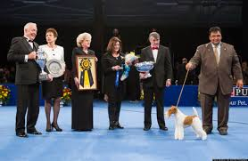 who won the dog show on thanksgiving 2012 national dog show winners of purina u0027s competition announced