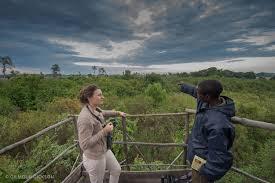 witness the bat migration kasanka national park zambian safari
