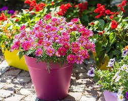 plant finder find your perfect plant st bridget nurseries