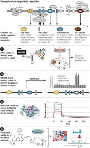 the cancer epigenome concepts challenges and therapeutic