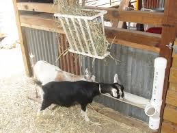 homemade hay feeders for goats goats and their feeders to view