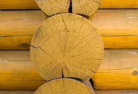 what is the best wood to use for cabinet doors wood species for log homes choosing your wood species