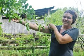 native edible plants plant city plant lovers share unusual fruits of their labor tbo com