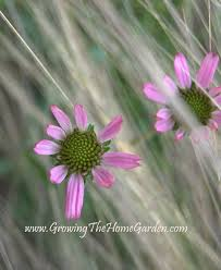 native plants of tennessee a mix of natives for wildflower wednesday growing the home garden