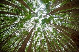 looking up into the trees stock photo thinkstock