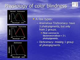 Most Common Type Of Color Blindness Color Vision By Andrew J Pakchoian Psych 159 Prof Macleod Ppt