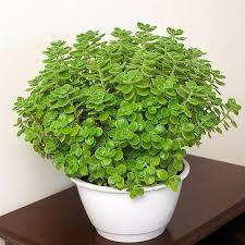 Herb Garden Winter - delectable edibles you can grow in your indoor winter garden