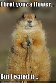 Groundhog Meme - groundhog meme city
