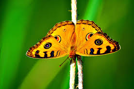 spirit guides meanings butterfly spirit guide hubpages