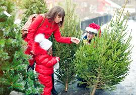 christmas tree stores in london pines and needles