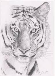 tiger face by nekojo on deviantart