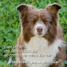 australian shepherd quotes funny dog faces with quotes funny dog faces with quotes