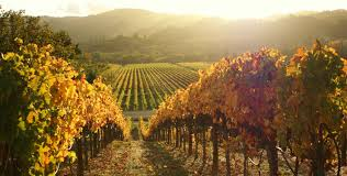 northern california wine country request information